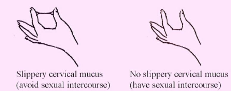 Observe cervical mucus